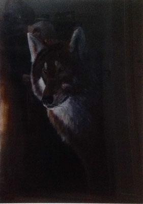 Wolf, acryl op papier, A2 formaat, met lijst, 250,00 euro