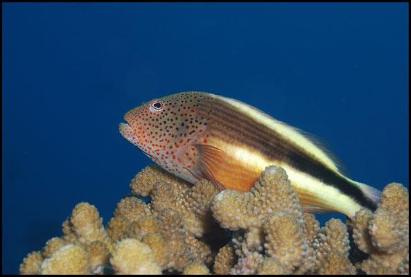 Unterwasser 01