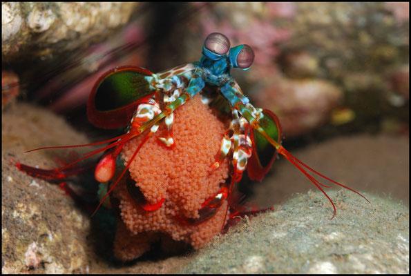 Unterwasser 04