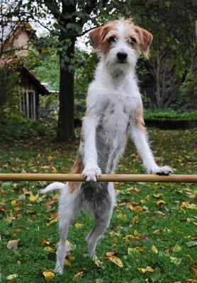 Gymnastik 1