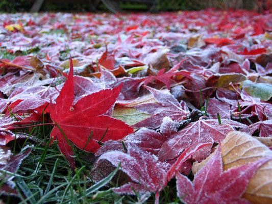 Осень в Стокгольме