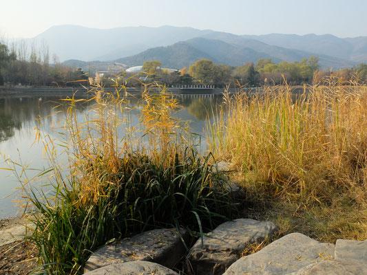 Осенней травы