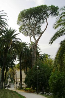 Вилла Торлония, парк