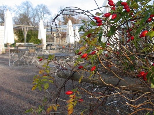 В саду Розендаль