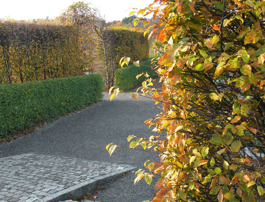 Лабиринт в саду Розендаль