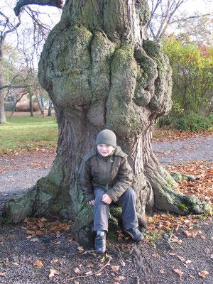 Малыш на прогулке. Старые деревья Юргордена