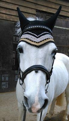 Schampus Pony - vorrätig