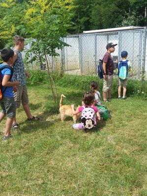 Kindertierschutz in Kiskunhalas/Ungarn