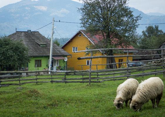 Dorf in der Maramures