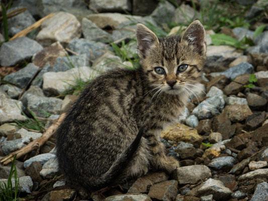 Straßenkatzen gibt es auch