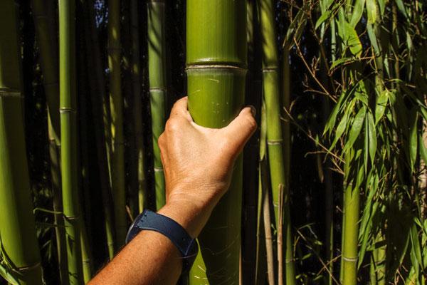viele Bambushaine