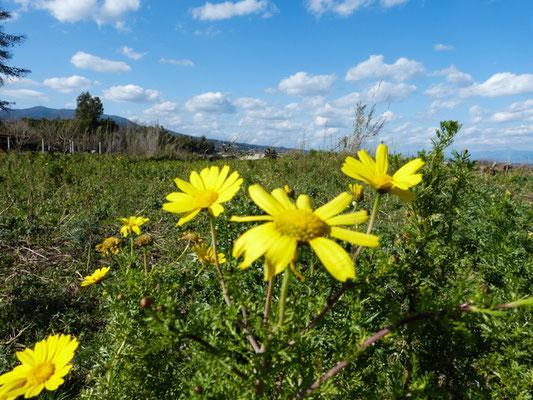 Frühling auf dem Peloponnes