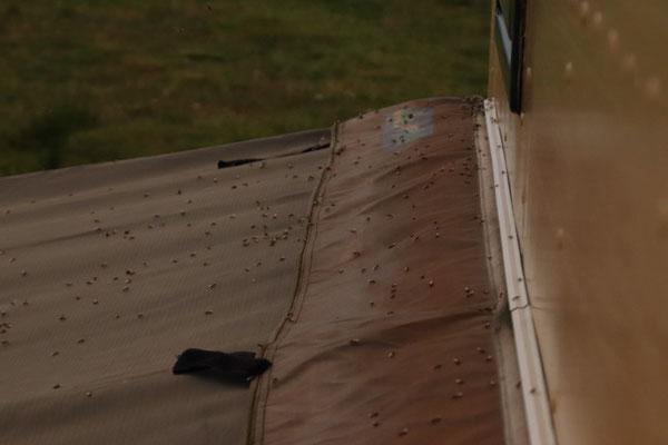 Kleiner Auszug von der Ameisenkolonie