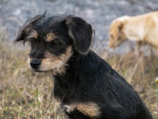 einer der vielen herrenlosen Hunde Portugals