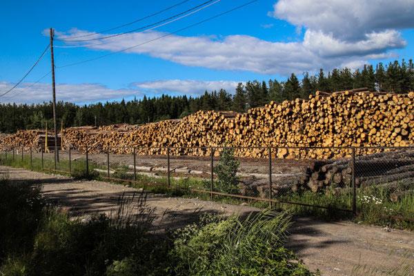 Holz, Holz, Holz