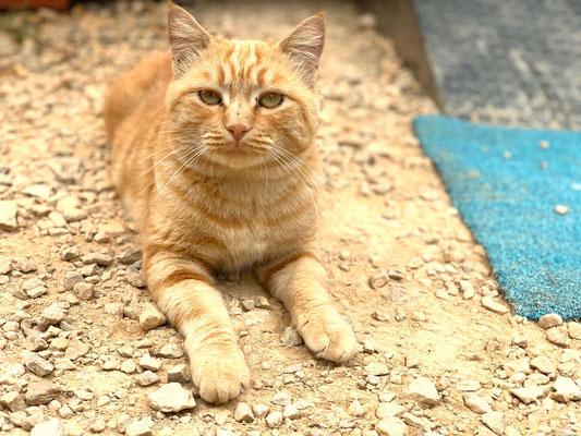Garden Cat / Milo