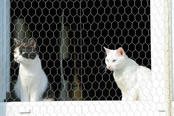 Beide Kitten