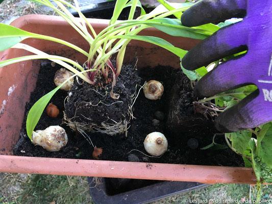 Placer les plantes et les bulbes