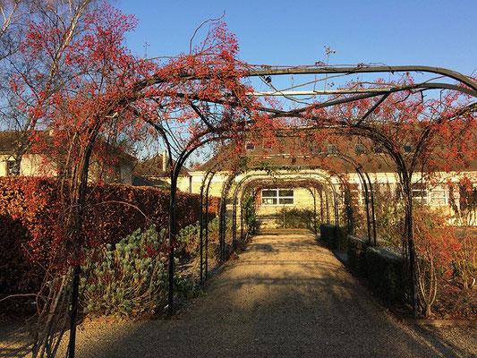 Arcade de rosiers plein de fruits rouges en automne. © Sandrine Tellier