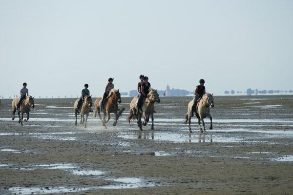 Pferderennen im Watt von Duhnen