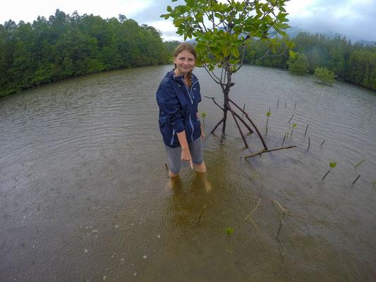 Unsere Baby-Mangrovenbäume