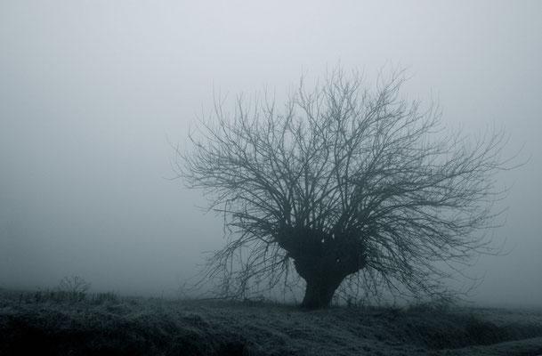 Gelso nella nebbia dei fondovalle