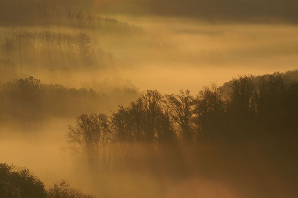 Alba nei boschi collinari