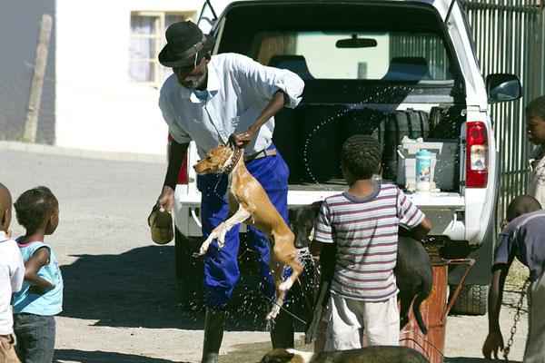 In der Township bei der Stadt Graaff Reinet werden die Hunde desinfiziert.