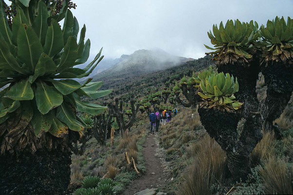 Auf dem Weg zum Mt. Kenia