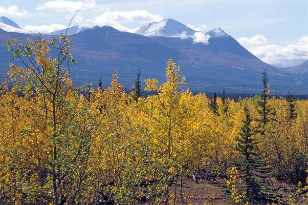 Indian-Summer in Alaska im Denali - Nationalpark.