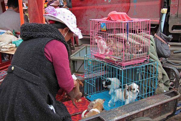 Auch das gibt es auf dem Markt von Lijiang zu kaufen!
