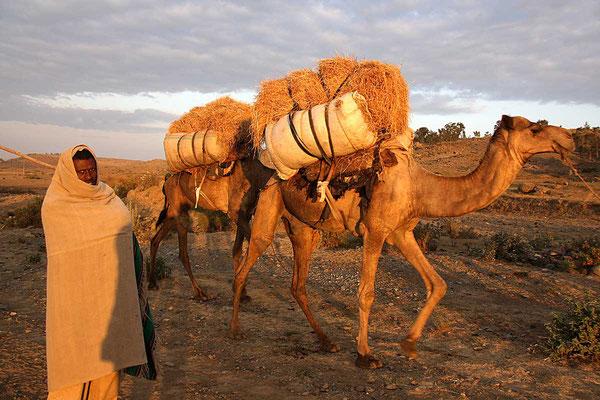 Salz - Karawane bei Mekele im ersten Licht des Tages.