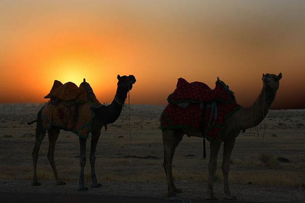 Wüste Thar, nahe der Grenze zu Pakistan.