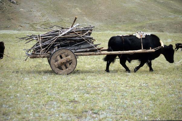 Auf diesen Wagen transportieren die mongolischen Nomaden alles - auch Hab und Gut bei ihren Umzügen.
