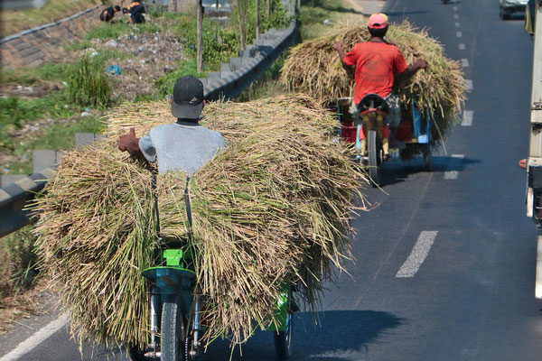 Das Zweirad ist ein geduldiger Lastesel (oft auch als Dreirad)