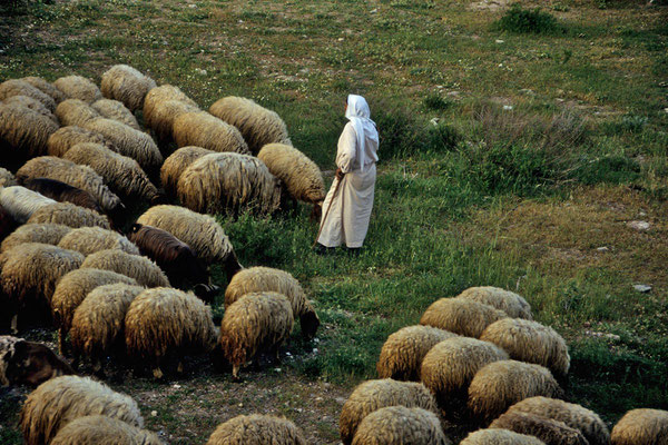 Auf den Hirtenfeldern bei Bethlehem.