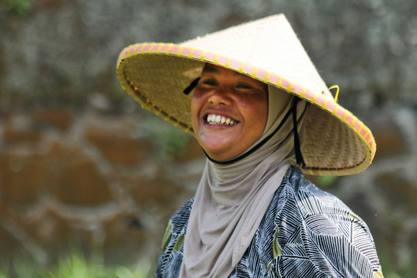 Reisbäuerin auf dem Feld in Nord-Sumatra