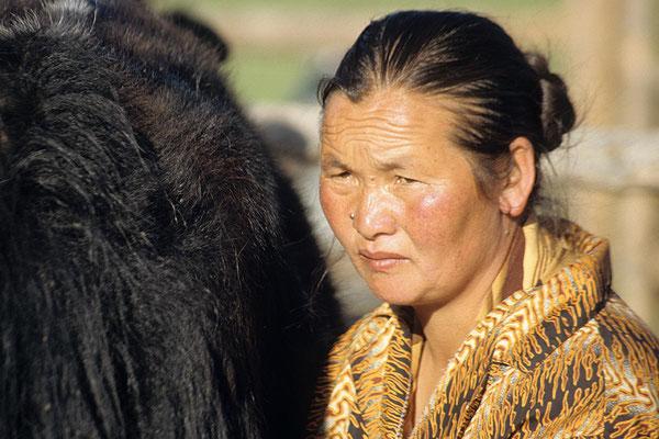 Mongolische Bäuerin beim Melken.