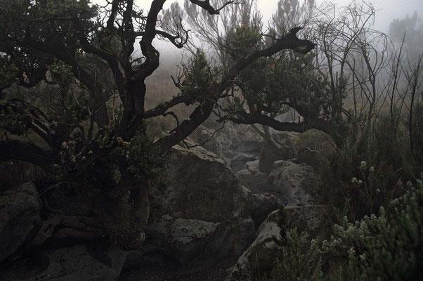 Auf dem Weg zum Kilmandscharo durch die Nebelwaldzone.