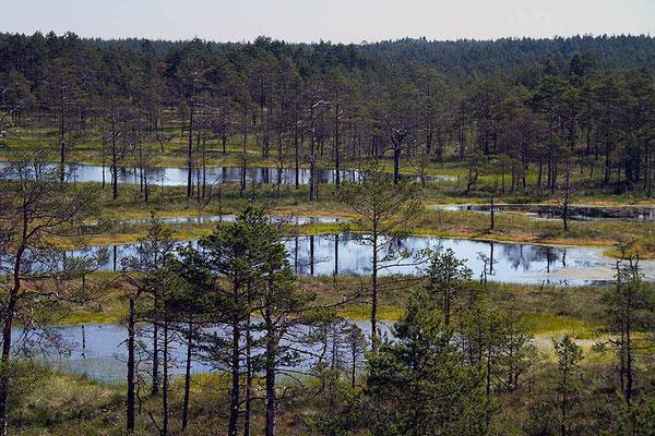 Reizvolle Moorseen im Lahemaa - Nationalpark / Estland.