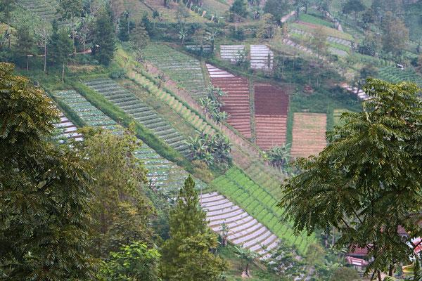 Steil bergauf und begab wandern wir entlang saftig grüner Felder und durch traditionelle Dörfer in Ost-Java