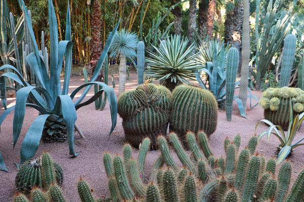 """Im Garten """"Jardin Majorelle"""" in Marrakesch."""