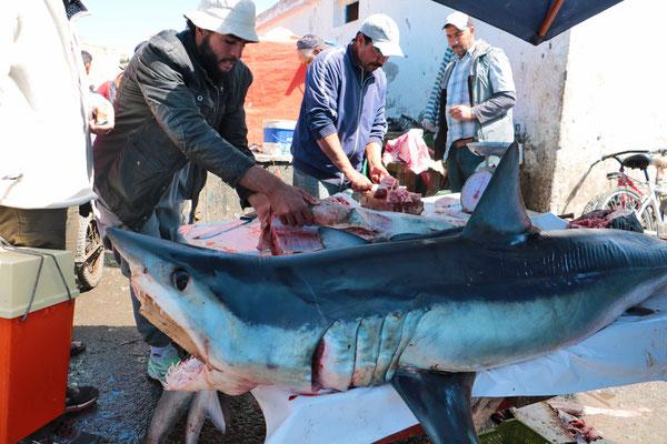 Lebhaft geht es am Hafen von Essaouira zu. Hier ein von den Fischern gefangener Hai.