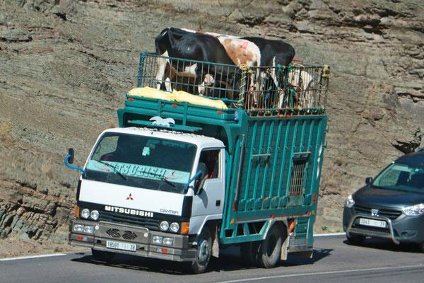 """Schlachtviehtransport über den """"Col du Tichka"""", mit 2260 m. Höhe der höchste Pass im Atlasgebirge und in Marokko."""