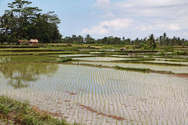 Bei der Radtour geht es nicht nur durch kleine Dörfer, sondern auch vorbei an malerisch gelegegenen Reisfeldern