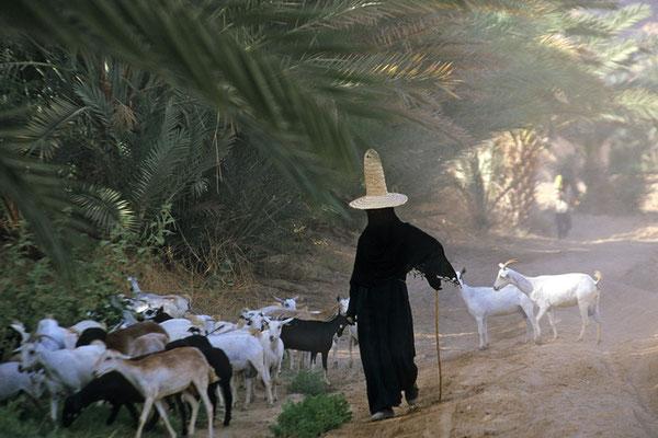 Mit den ersten Sonnenstrahlen zieht eine Frau mit ihrer Herde durch das Wadi Hadramaut. Sie trägt noch den für die Provinz Hadramaut typischen Spitzhut.