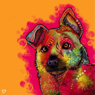 Oliver. Hond portret. Paintshop Pro.