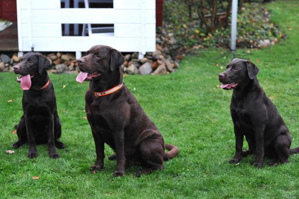 Trine, Skipper + Lea
