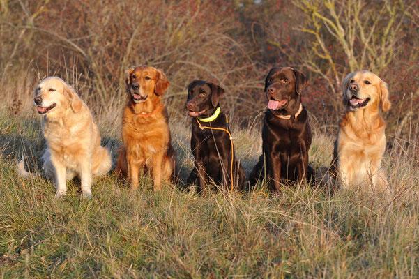 Jahresabschlusstraining mit Greta, Ellie, Trine, Skipper + Blue