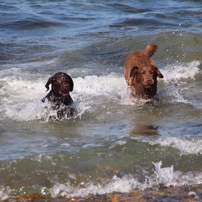 Carlo beim Anbaden in der Ostsee